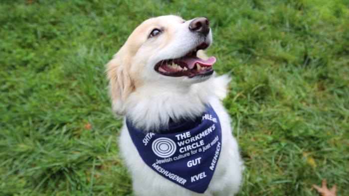 In New York City, The Dogs Speak Yiddish