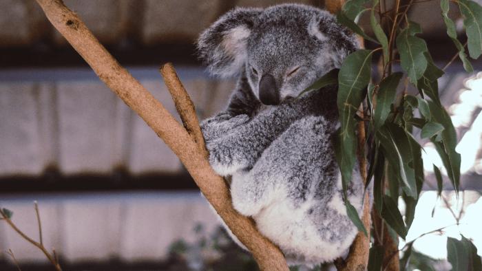 How To Speak Australian