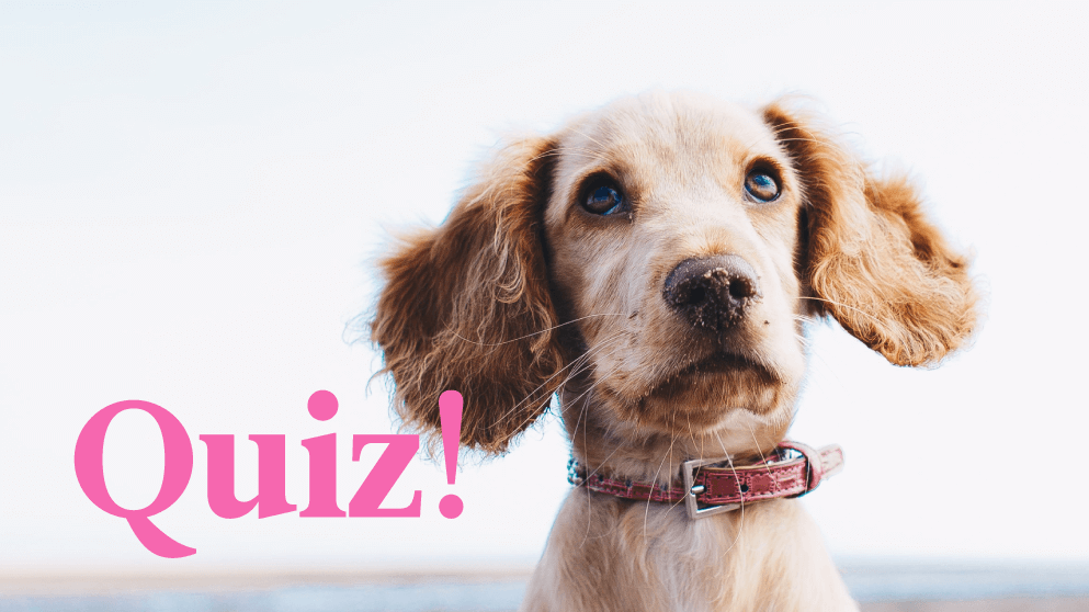 Quiz: Which Dog Breed Should Be Your Language-Learning Partner?