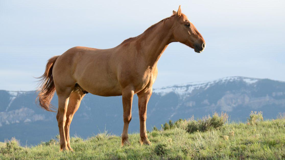 Animals and Language — Horses