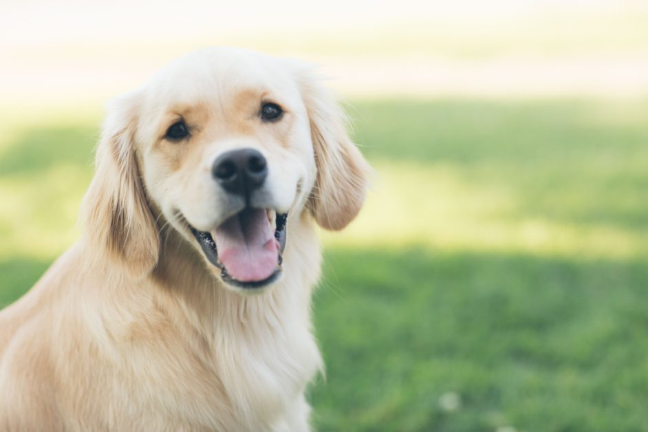 Animals and Language — Dogs