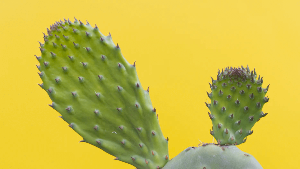 cactus on a yellow background swear words
