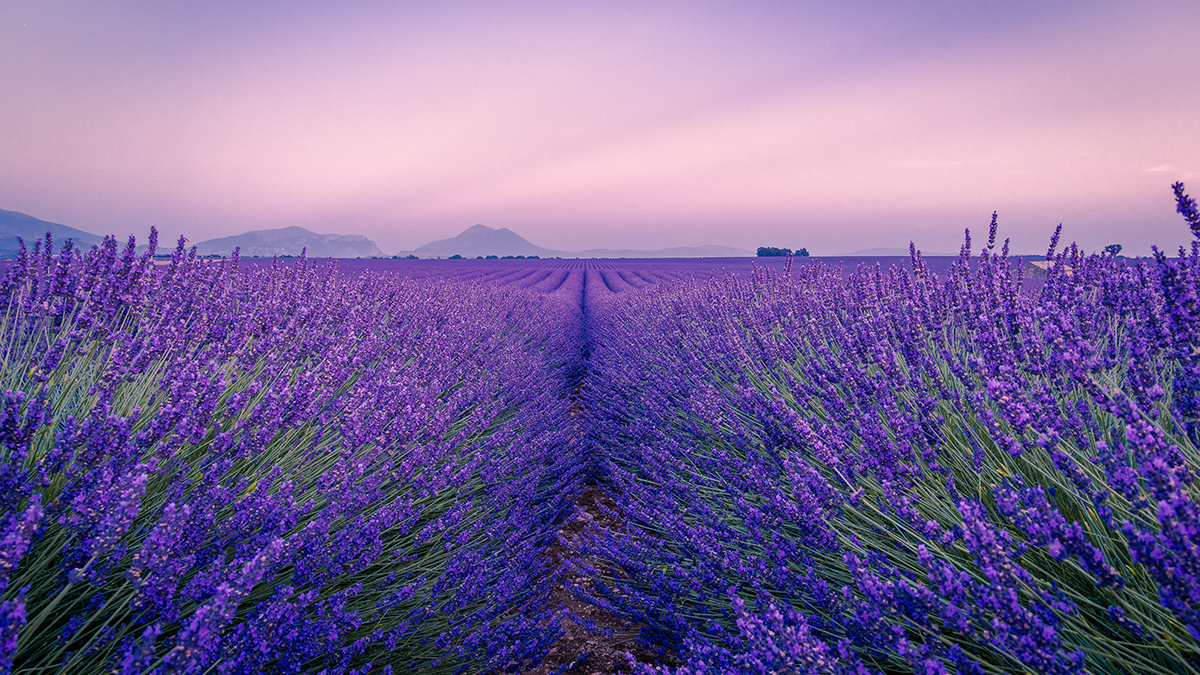 A landscape in Provence to represent Provençal French