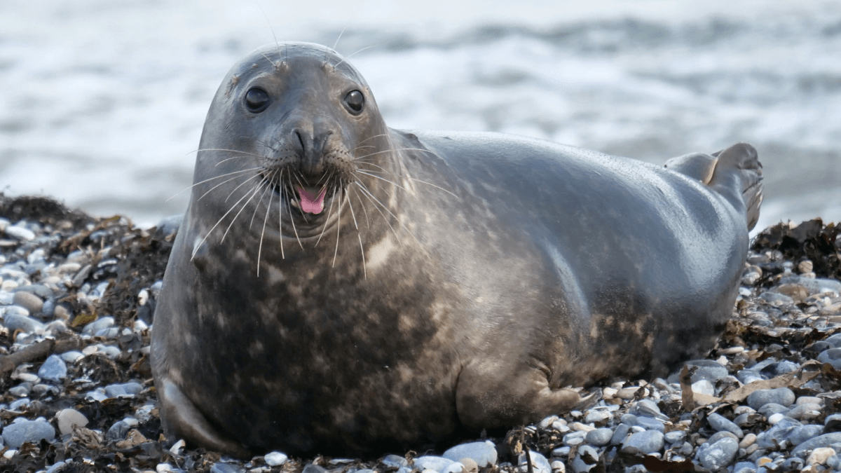 seal posing on rocks with its mouth open words that sound dirty